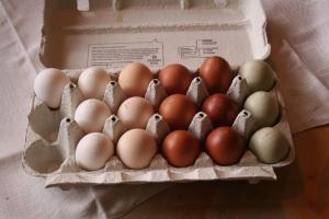 Alla äggfärger